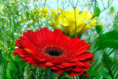 Bouquet of red and yellow flowers — Stock Photo
