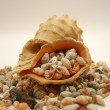 Stock Photo: One large and lot of small shells