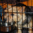 Poor dog in a cage — Photo