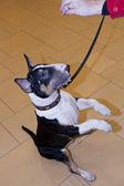 Dogs exibition — Foto de Stock