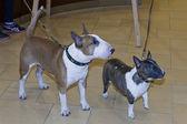 выставка собак — Стоковое фото