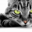 Green-eyed cat — Stock Photo #1095588