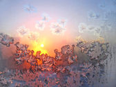 Frost and sun — Stock Photo