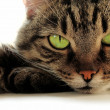 Foto Stock: Green-eyed cat