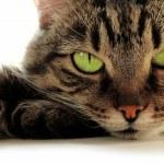 Green-eyed cat — Stock Photo