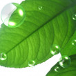 Stock Photo: Closeup of green leaf with abstract air