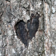 Stock Photo: Love symbol on trunk of tree