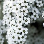 Close-up of beautiful white flowers — Stock Photo #1163263