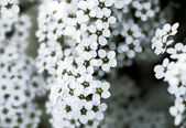 Close-up of beautiful white flowers — Stock Photo