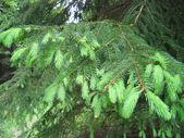 Kožešinové větve stromů zasta — Stock fotografie