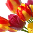 Bouquet of beautiful colorful tulips - Stock Photo