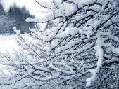 Zweige unter einer schnee — Stockfoto