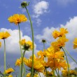 Stock Photo: Beautiful yellow flowers