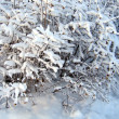 Stock Photo: Snow cover