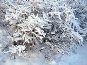 Snow cover — Stock Photo