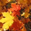 Stock Photo: Autumn fall leaves