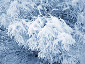 Snow cover — Stock Photo
