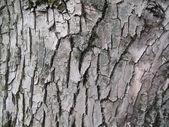 Bark texture — Stock Photo