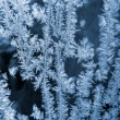 Stock Photo: Blue frosty natural pattern