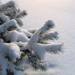 松雪下的分支机构 — 图库照片
