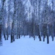 Winter trees — Stock Photo #2584459