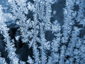 Blue frosty natural pattern — Stock Photo