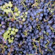 Grapes background — Stock Photo #2591283