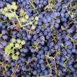 Royalty-Free Stock Photo: Grapes background