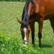 Pasture of horse - Stock Photo