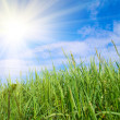 Green grass and sun — Stock Photo #1191047