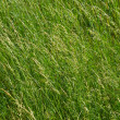 Grass background — Stock Photo #1191367