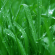 Royalty-Free Stock Photo: Drops raining on a green grass
