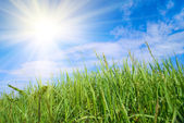 Green grass and sun — Stock Photo