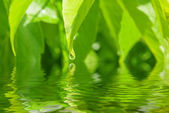 Reflection of leaves is in water — Stock Photo