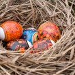 Easter eggs are in a nest — Stock Photo