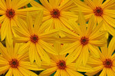 Background from colors yellow — Stock Photo