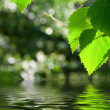 Green Leaves Reflecting In Water — Stock Photo #1390413
