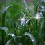Rain drops — Stock Photo #1614512