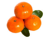 Ripe mandarins with laeves — Stock Photo