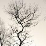 Tree — Stock Photo #1272994