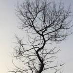 Tree — Stock Photo #1273023