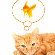 Cat playing with goldfishes isolated on — Stock Photo