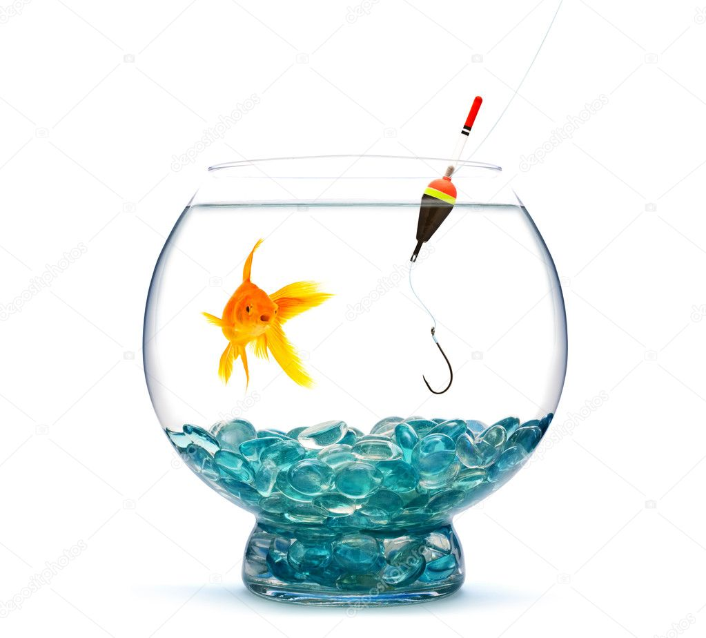 Goldfish in aquarium on white background — Stock Photo #1205270