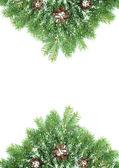 Christmas framework with snow and cones — Stok fotoğraf