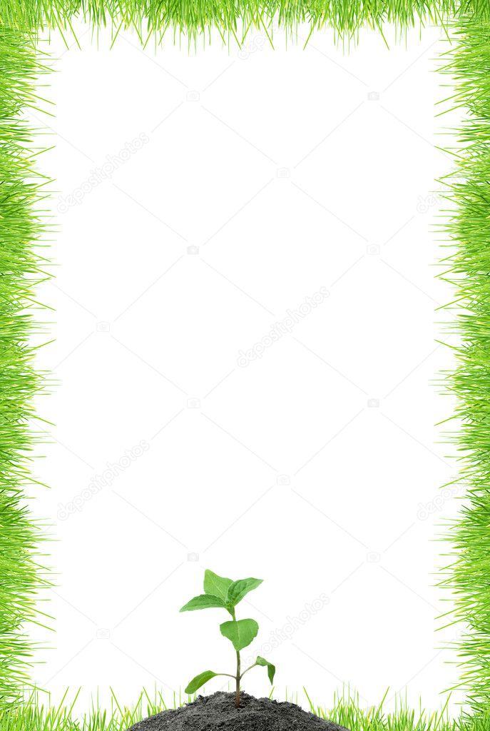 在白色背景上的孤立绿草