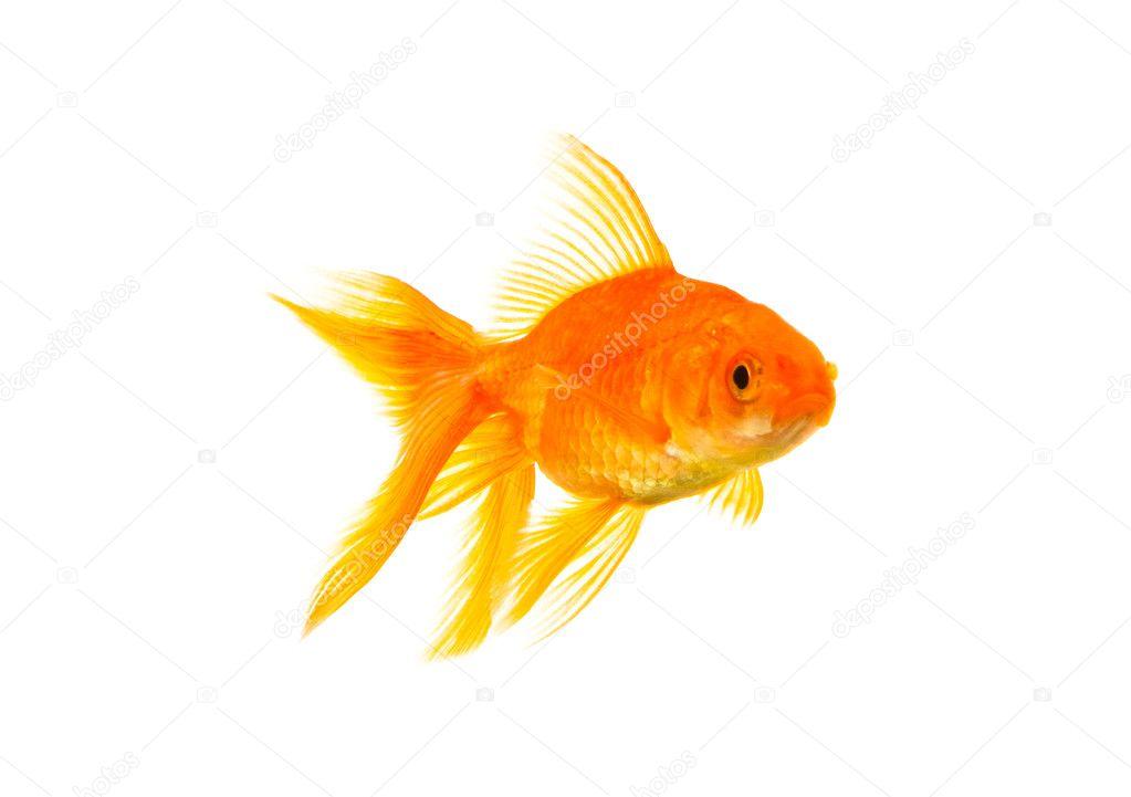 К чем снится золотая рыбка