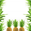 Stock Photo: Ripe pineapple