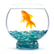 Gold fish in aquarium — Stock Photo