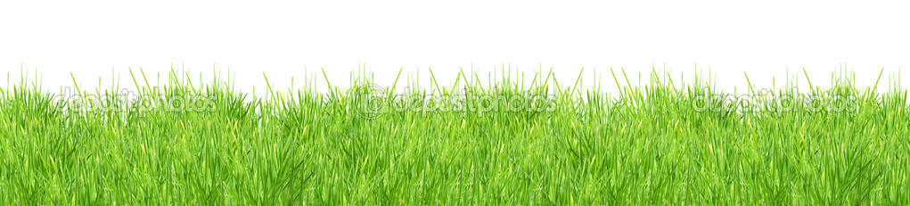 Isolated green grass on a white background  Stock Photo #2531476
