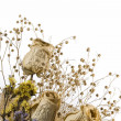 Bunch of Dried Flowers — Stock Photo